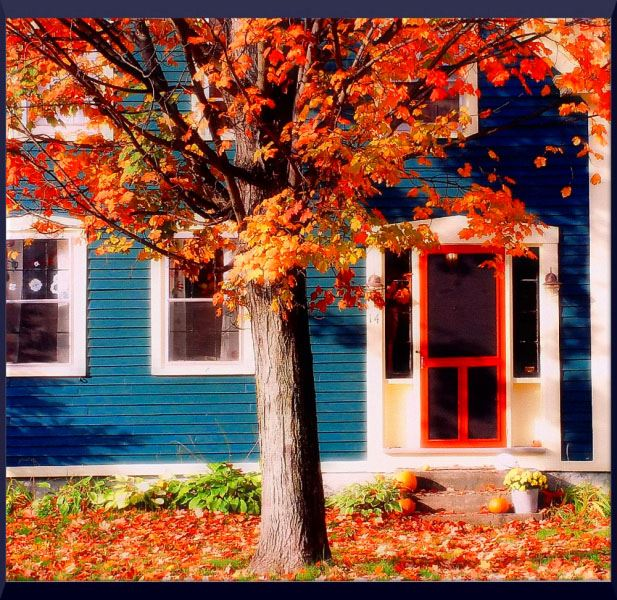 Tree with fall leaves in front of bright blue house with red door