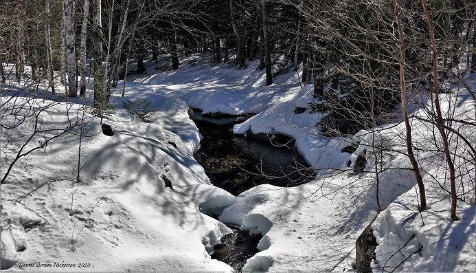 snowy forest with brook running through credit: Danna Brown Nickerson