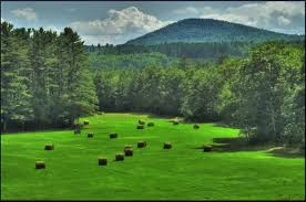 green meadow with hay bales